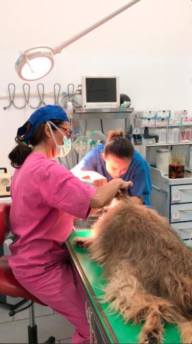 Intubazione per anestesia gassosa